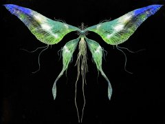 moonlight-butterfly.jpg