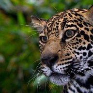 Jaguar360