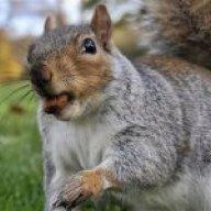 Big D Squirrels
