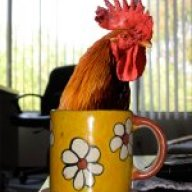 chickncup