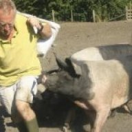The pig-keeper