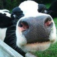 milkmafiamaster